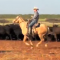 Marty Daniel cutting cattle on the Renderbrook Spade Ranch.