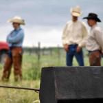 Cattle Branding at John Erickson Ranch